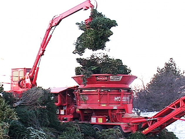 Tree Mulcher